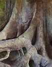 Roots by Simone Riley