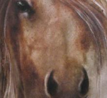 Horse equine animals,wildlife,wildlife art,nature Sticker