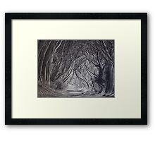 The Dark Hedges by Gary Rudisill Framed Print