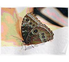Butterfly Oil Pastel Poster