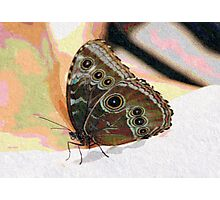 Butterfly Oil Pastel Photographic Print
