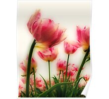 Pink Tulips for Mom Poster