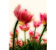 Pink Tulips for Mom Photographic Print
