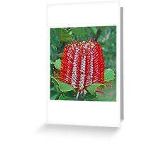 Scarlet Banksia, Monjimup Lake Reserve, Esperance, Western Australia  Greeting Card