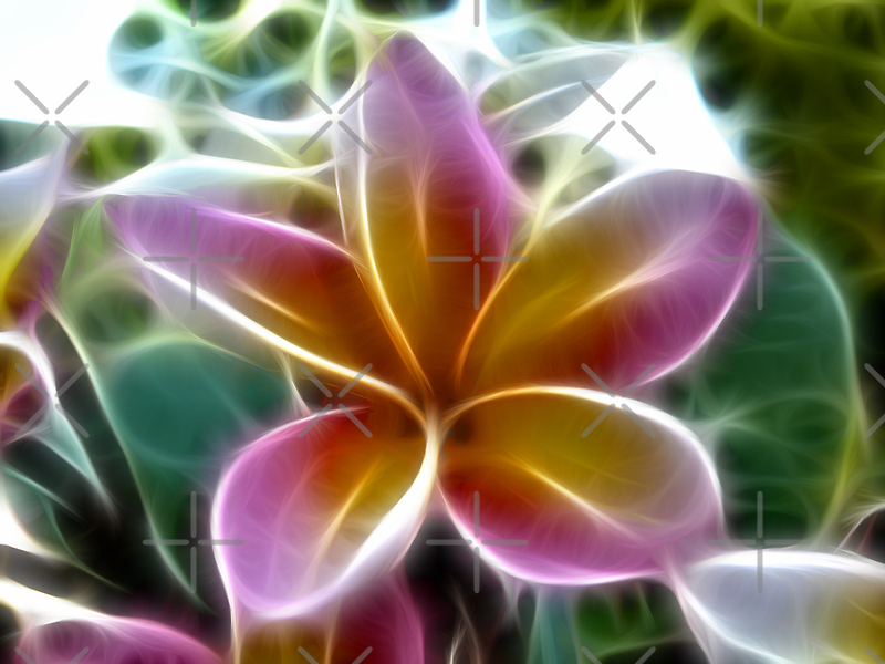 Tricolour Frangipani by Clintpix