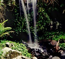 Curtis Falls Mt Tamborine by smallan