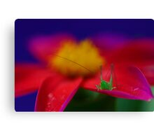 Little Hopper Canvas Print