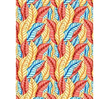 multicolored pattern of leaves Photographic Print