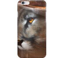 Cougar Puma panther animals,wildlife,wildlife art,nature iPhone Case/Skin