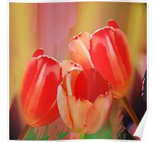 Three colourful tulips on an abstract background Poster