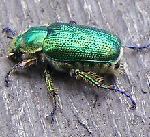 iridescent beetle by gaylene