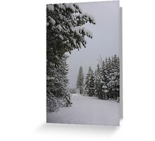 Snowfall in Washoe Meadows State Park Greeting Card