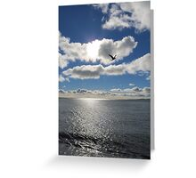 sky bird flies high Greeting Card