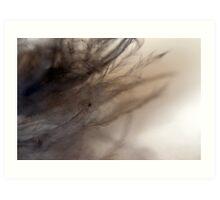 Feather Fluff Art Print