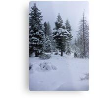 Winter in the Woods Metal Print