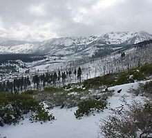 View of Meyers, CA by Jared Manninen