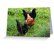 Three Bright Young Pullets Greeting Card