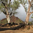 Gum trees in a storm by Catherine Clemow