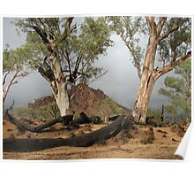 Gum trees in a storm Poster