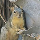 Squirrel watching me. by Gloria Abbey