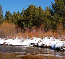 Snowy River Bank by Jared Manninen