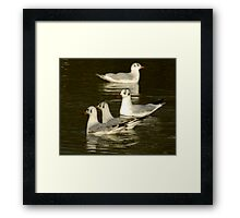 Seagulls #2 Framed Print