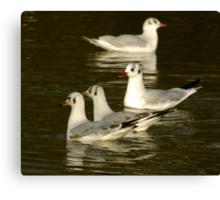 Seagulls #2 Canvas Print