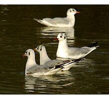 Seagulls #2 Photographic Print