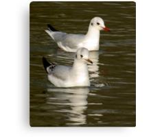 Seagulls #3 Canvas Print