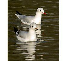 Seagulls #3 Photographic Print