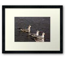 Seagulls #4 Framed Print