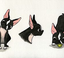 Watercolor Boston Trio by Kaylah Harris