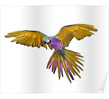 Galaxy Birds Poster