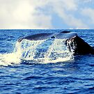 A Whales Tail...  by LjMaxx