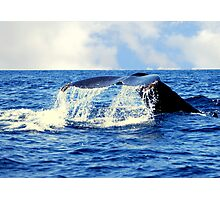 A Whales Tail...  Photographic Print