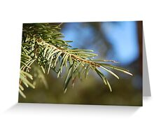 Branch of a White Fir Greeting Card
