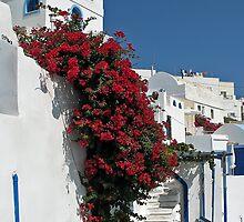 Gorgeous Santorini by Teresa Zieba
