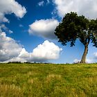 Lonely Tree by Dan Norcott
