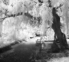 Infrared Tree by Ann Garrett