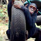 Chimp Swing by ApeArt