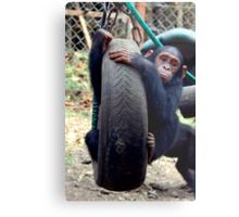 Chimp Swing Metal Print