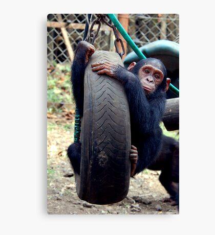 Chimp Swing Canvas Print