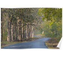 Forest Landscape Photo Frame Poster