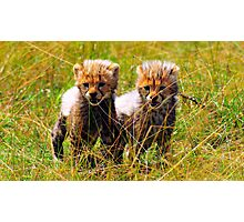The cheeta Cubs Photographic Print