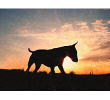 English Bull Terrier against Sunset, Oil Painting Style Print Photographic Print