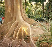KAPOK TREE by ROXANNE MORELLA