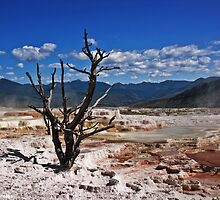 Mammoth Hot Springs by Alex Preiss