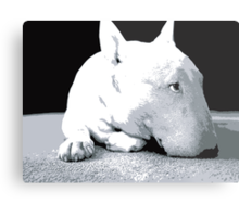 English Bull Terrier Dog, Black and White Pop Art Print Metal Print