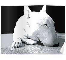 English Bull Terrier Dog, Black and White Pop Art Print Poster