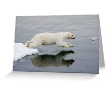 Polar Bear diving (without the bloody nose) Greeting Card